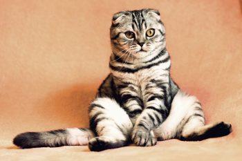 Stellvertreter für über 100 Katzen!!!