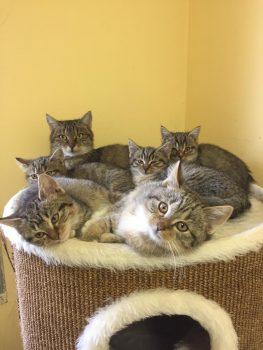 6 Jungtiere mit Mutter