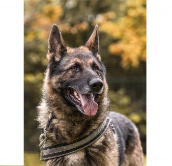 Rex 3 der Wachhund