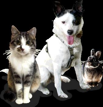 Unterstützen Sie das Tierheim Cottbus