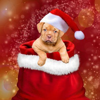 Tierweihnacht 15. Dezember 2018